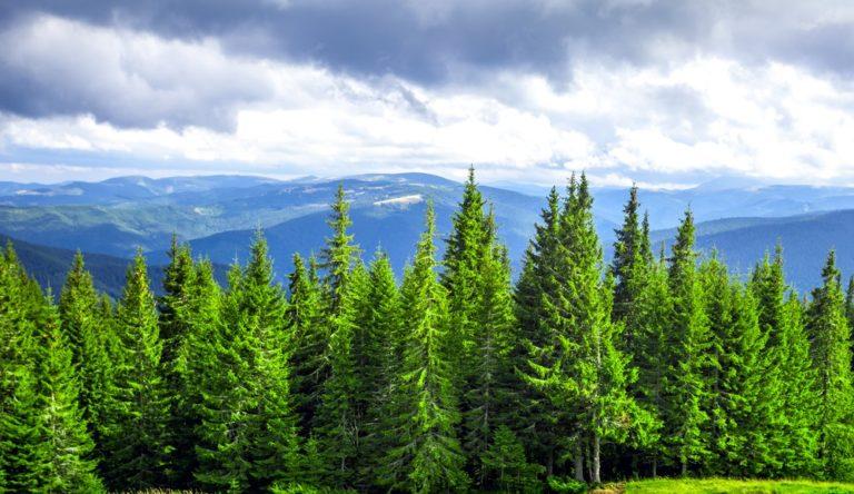 Skog i Norrland