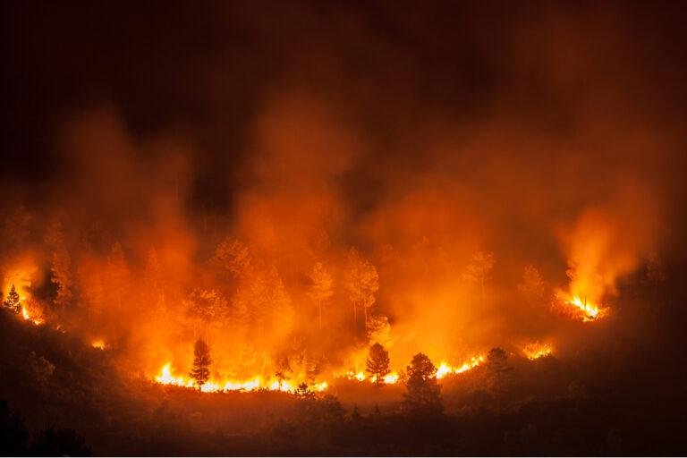 Skogsbränder i sommar